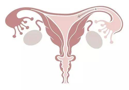 女性中医养颜养生术:每天15分钟,重获健康自信的美!-第35张图片-爱课啦